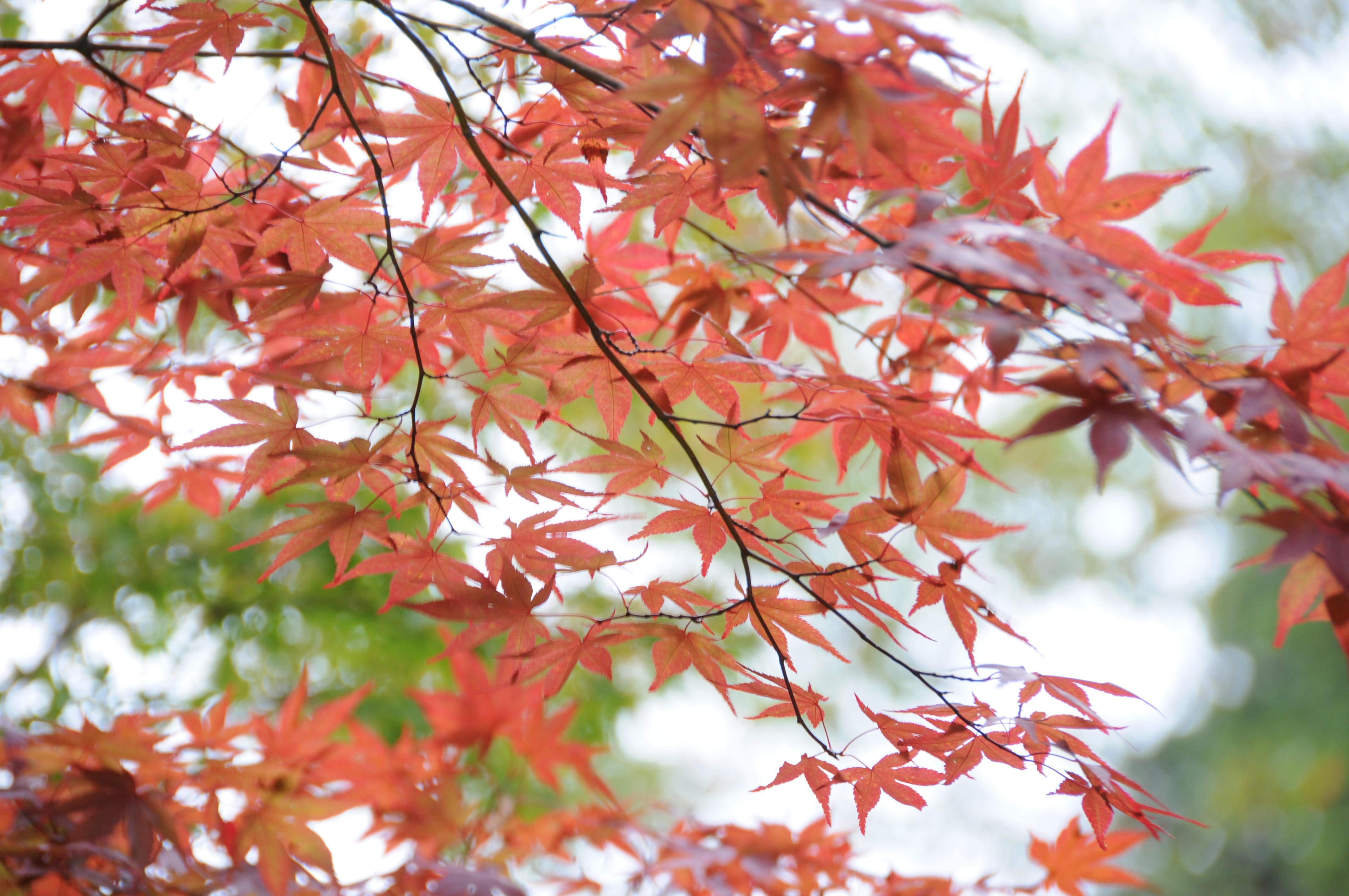一足早い秋の訪れ