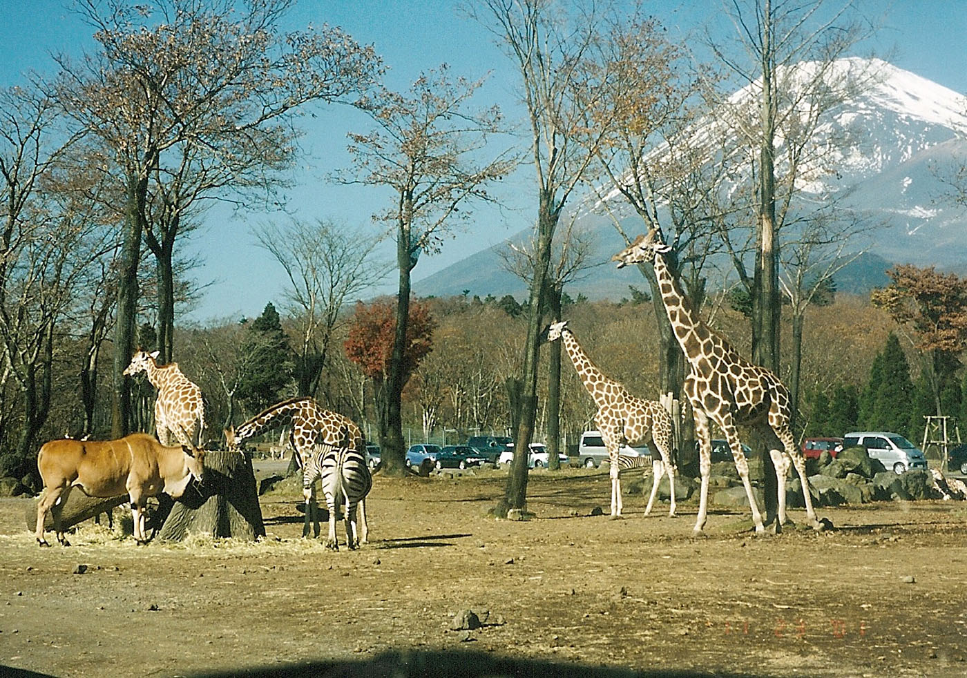 「富士サファリパーク」の画像検索結果