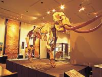 自然史博物館、千葉の自然と歴史を学ぶ!
