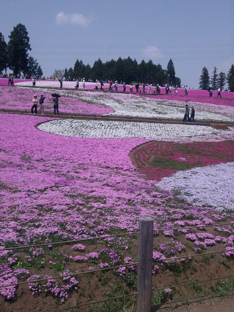 花よりも人混みに驚いた羊山公園