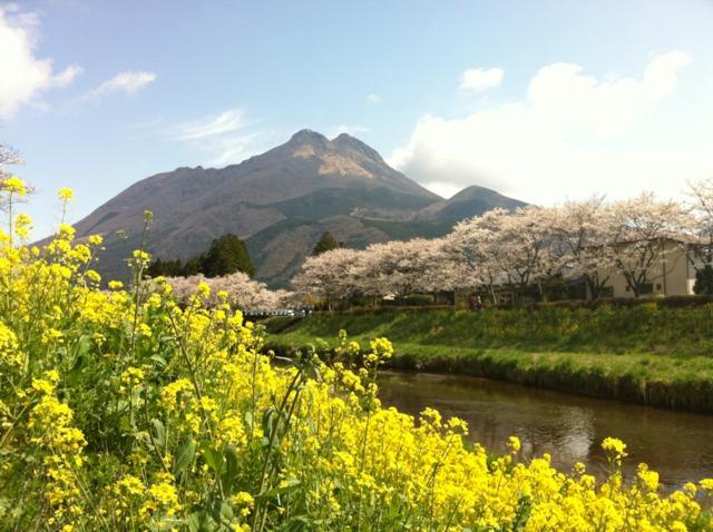山のホテル夢想園 ホテルから駅までは歩くと20分くらい。タクシーだと5分くらいでした。行きはタクシーを利用し、帰りは天気もよかったので歩いていたところ、こんなステキな風景に出会えました。菜の花と満開の桜と由布岳!