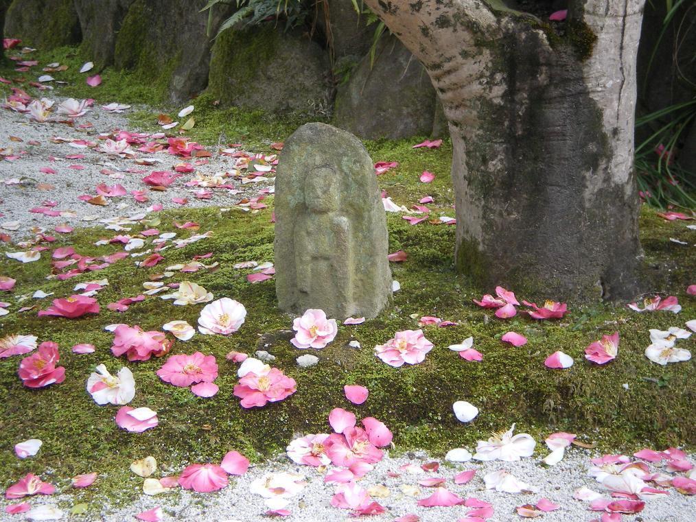 五色椿のある花のお寺
