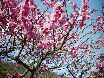 春に梅、夏に蓮