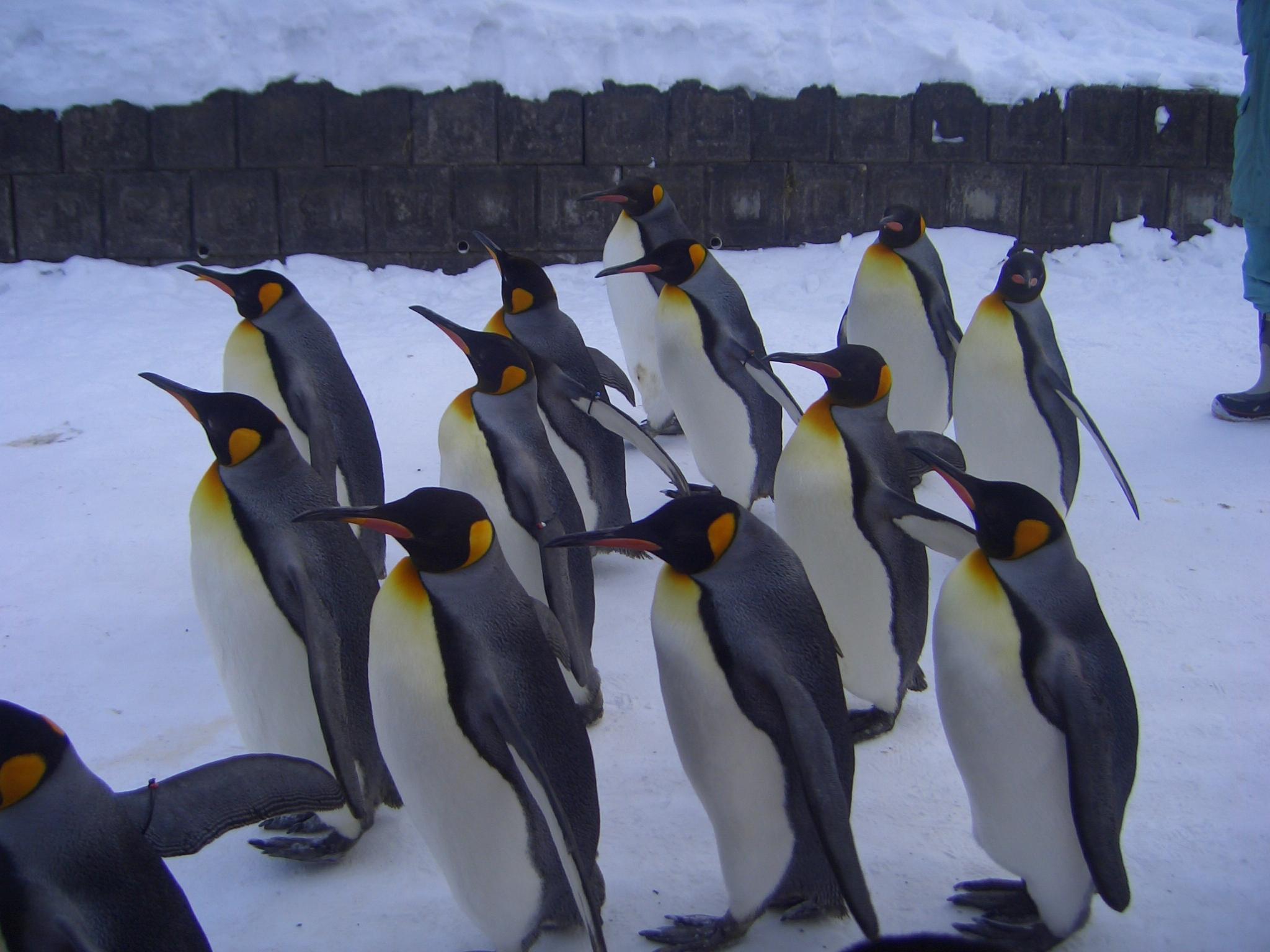 ペンギンの虜に??