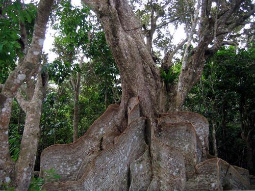 樹齢400年のエネルギー