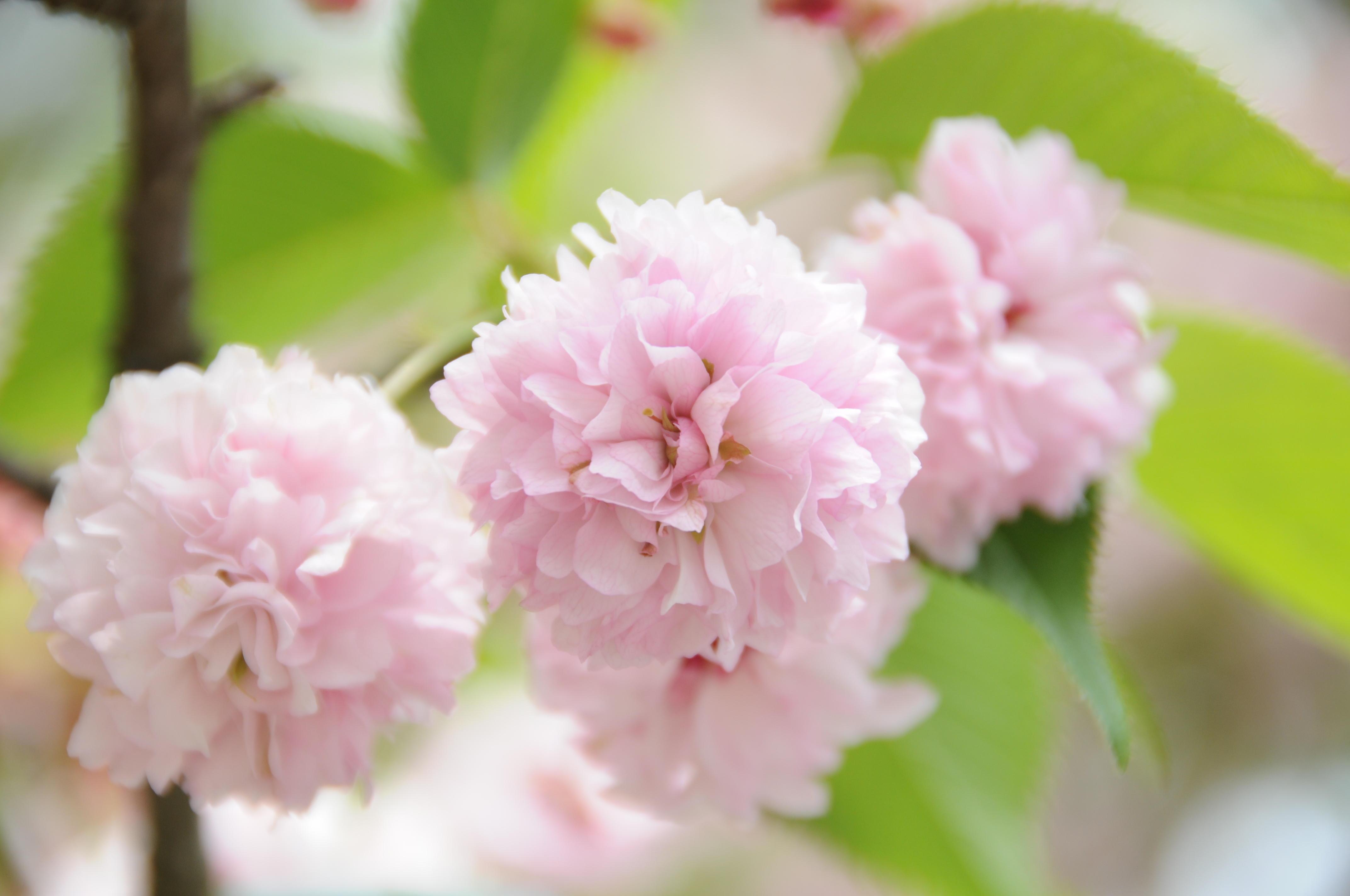 ものすごい花弁の数
