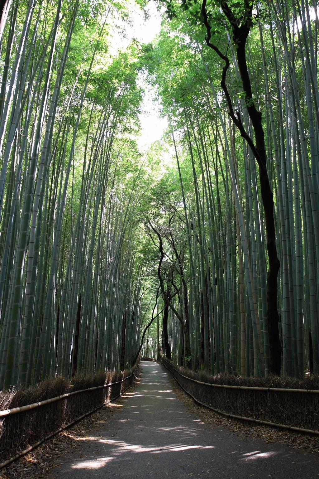 嵯峨野に広がる竹林の道