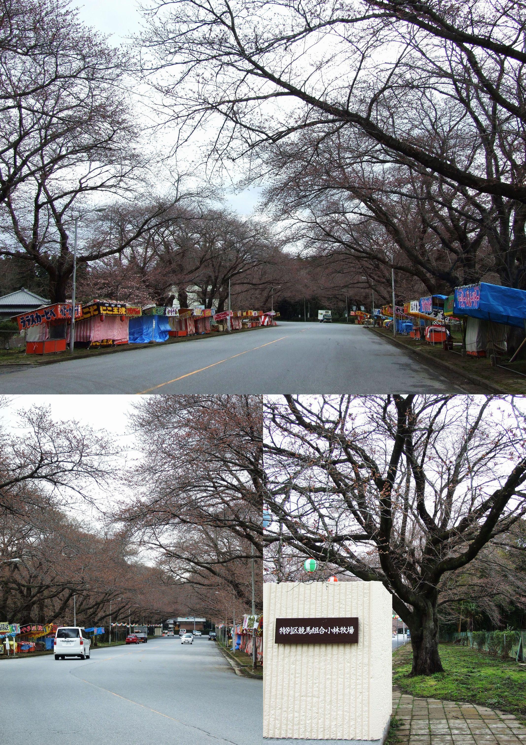 小林牧場 桜の名所です。