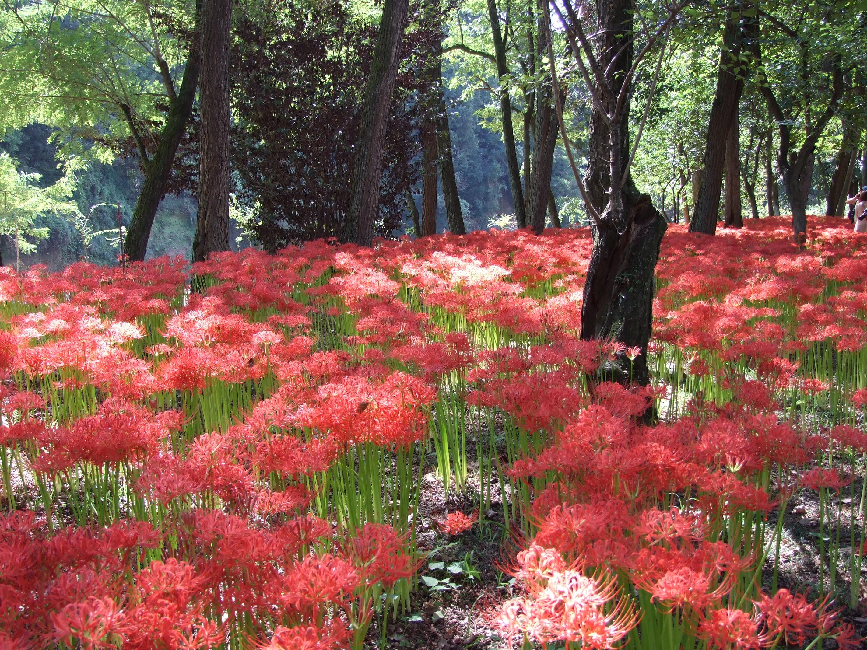 真紅の絨毯