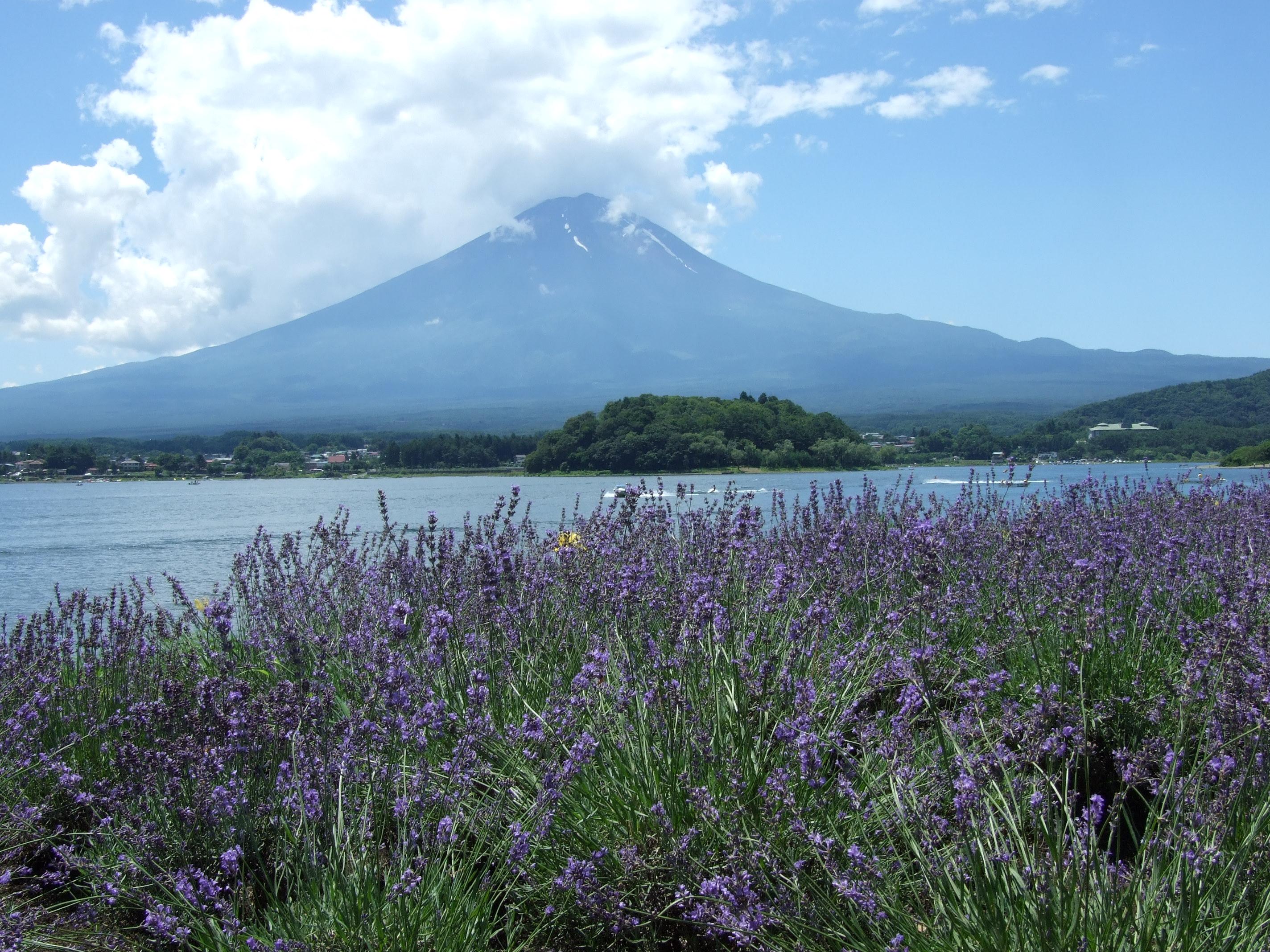 バス旅シリーズ 富士と湖とラベンダー