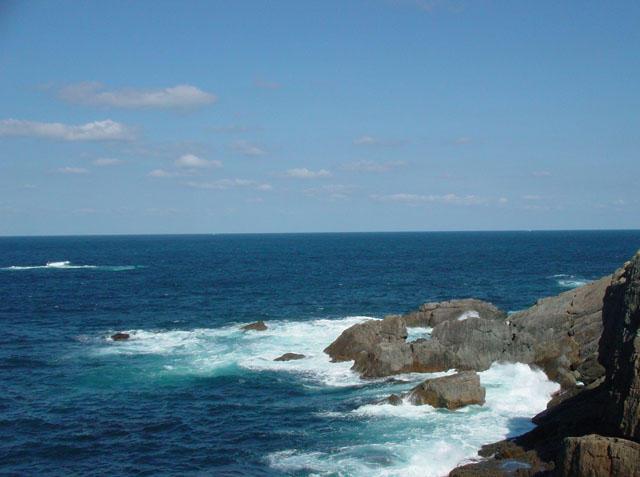 ウミネコのいる岬