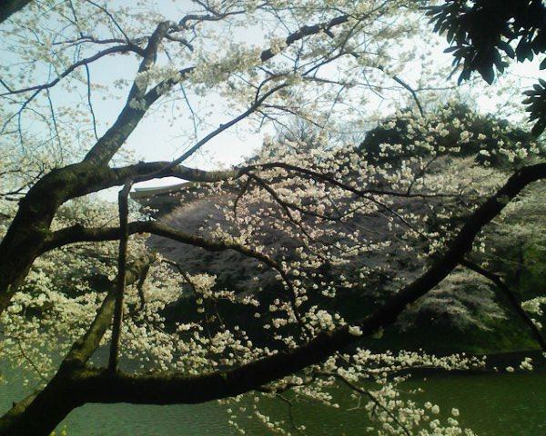 花見の名所・日本武道館・北の丸公園