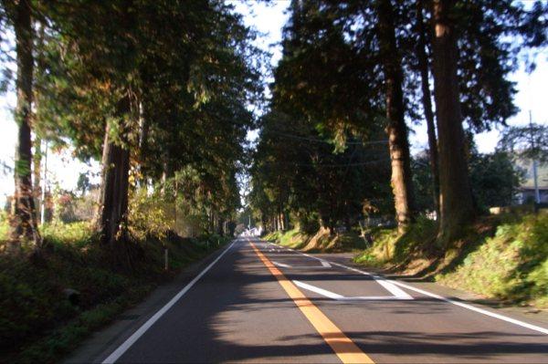 歴史を感じる杉並木