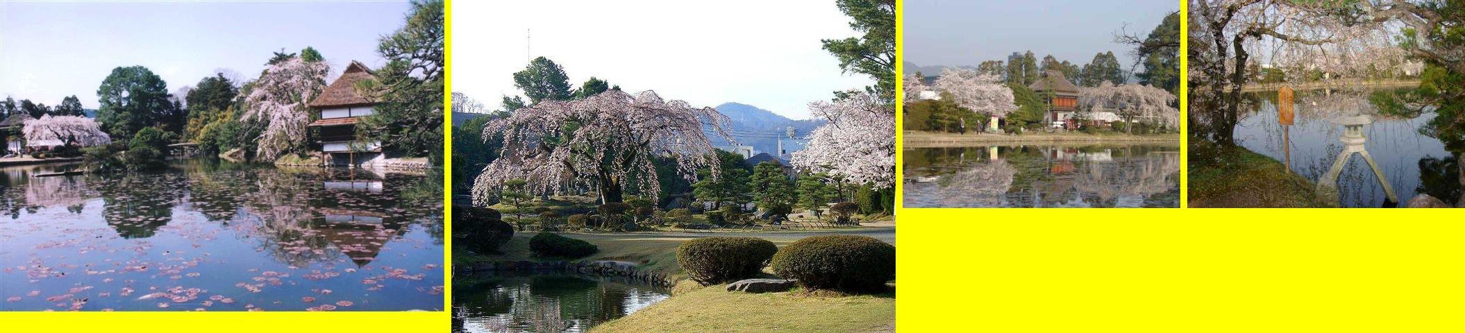 何といっても衆楽園は桜が最高です!!