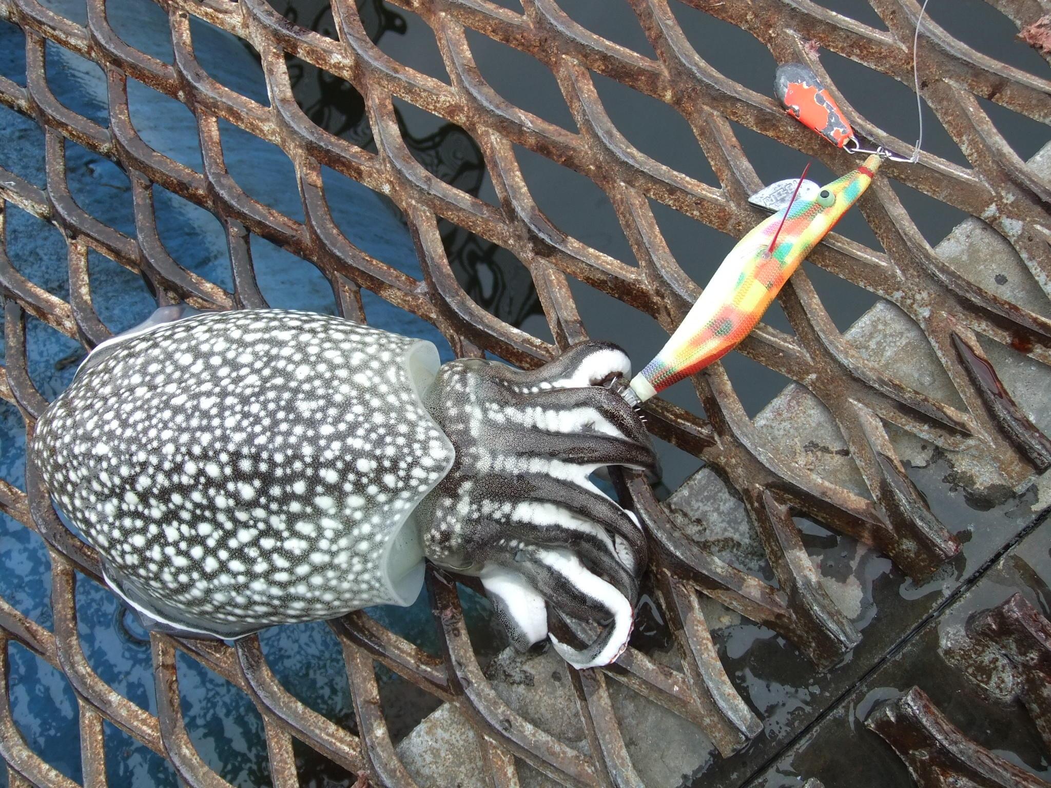 本牧海づり施設でイカ釣りに挑戦