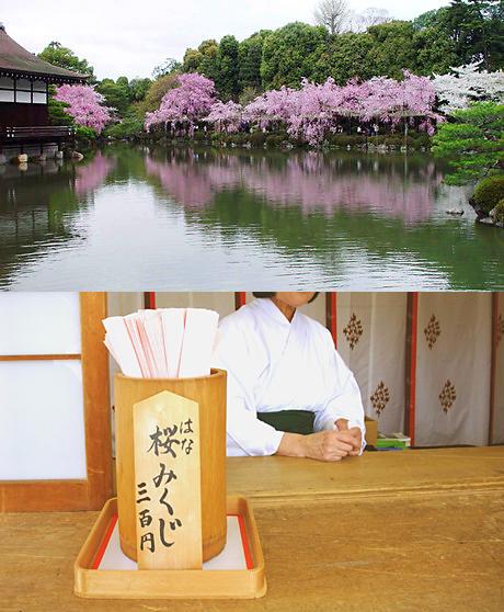 平安神宮の神苑と桜と花みくじ