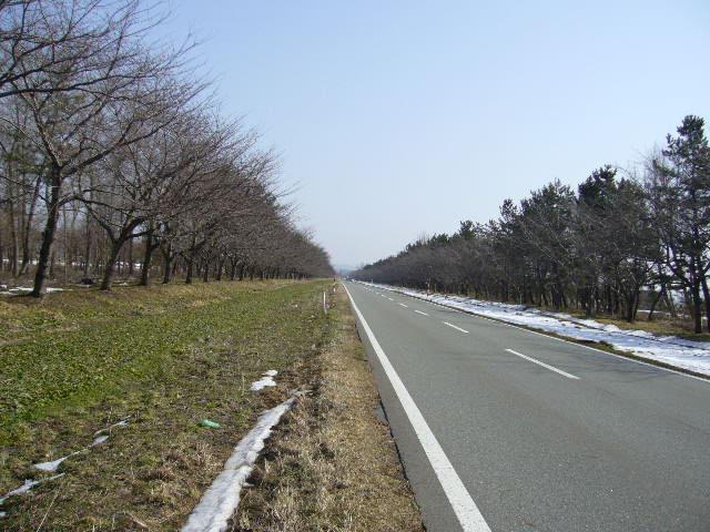ここは北海道でなく大潟村の菜の花ロード