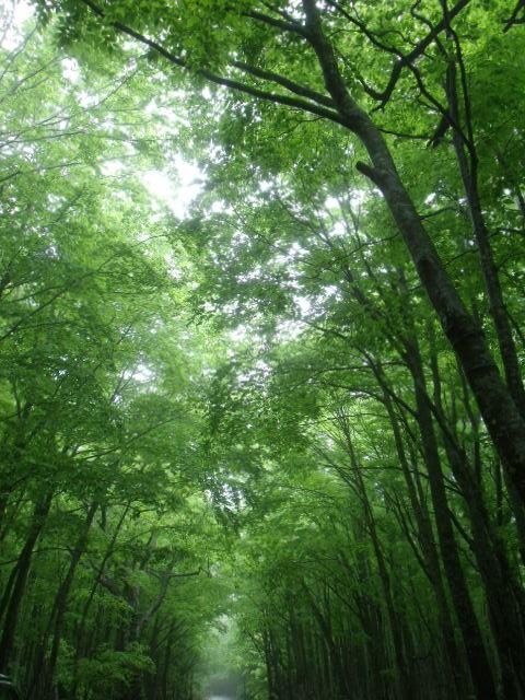 ブナ林の散歩